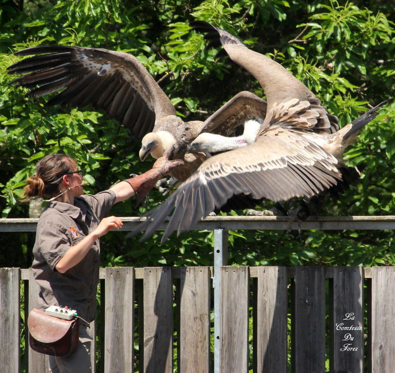 Courzieu : Les oiseaux du parc animalier (69690 Courzieu)