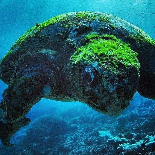 A hundred year-old turtle, Australia  Photo by @seanscottphotography