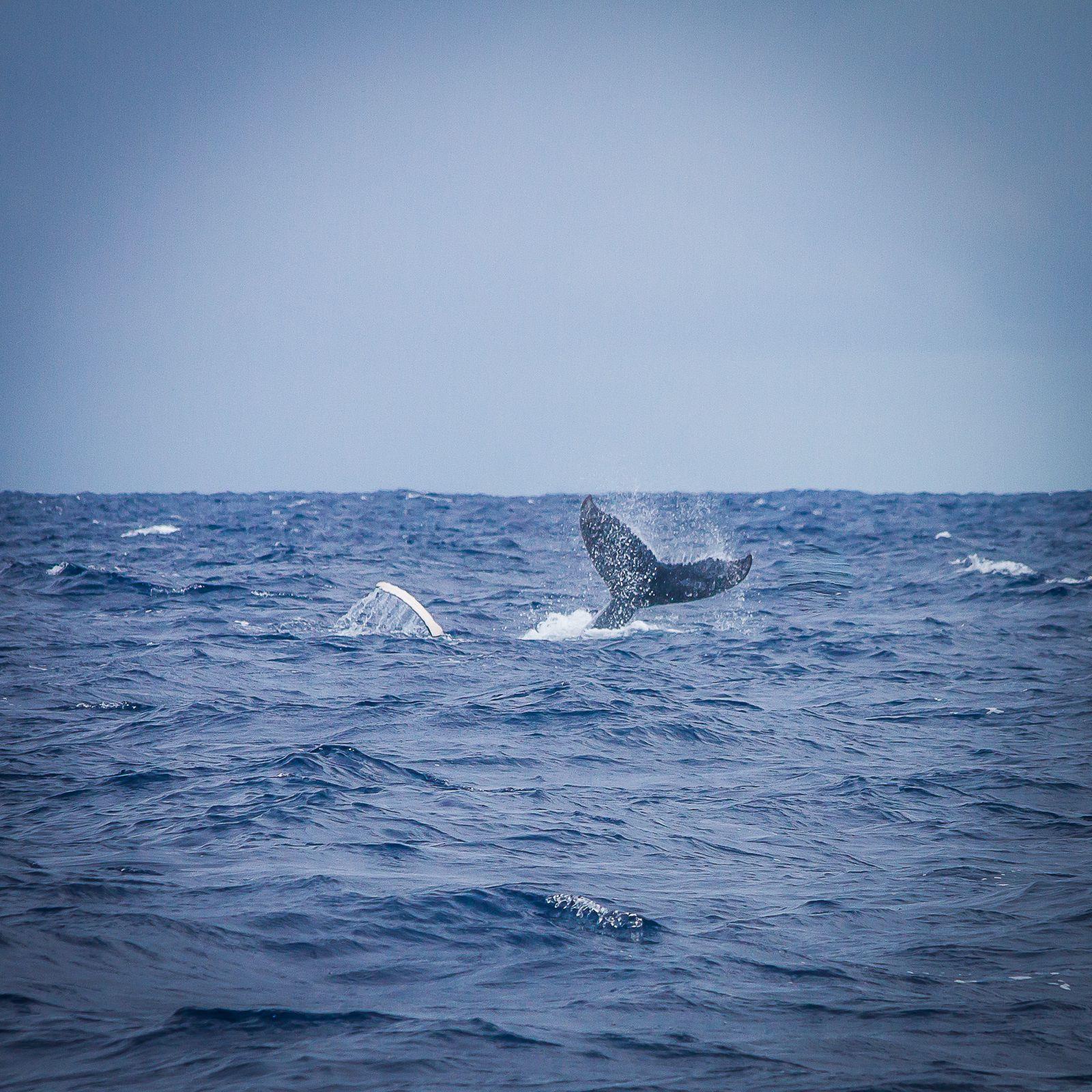 Les baleines sont de retour !