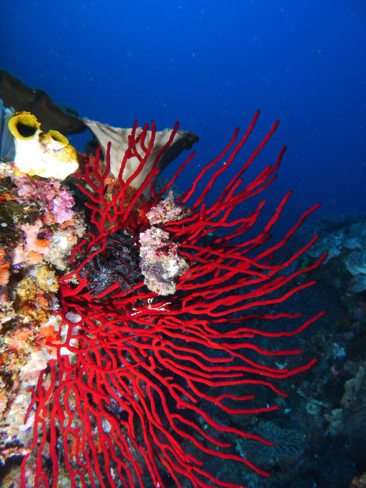 Bali Komodo