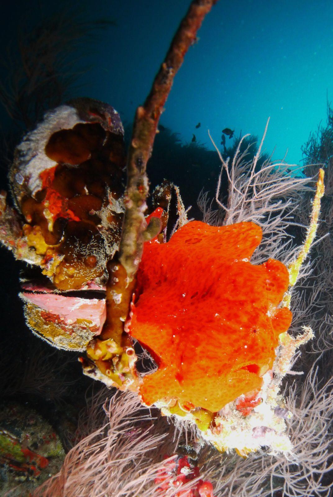 poissons clown, crapaud, murène, portrait de tortue imbriquée.