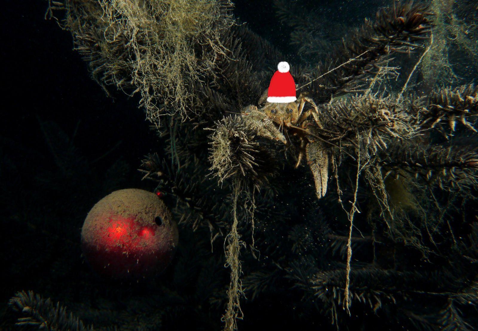 Noël approche....même sous l'eau!
