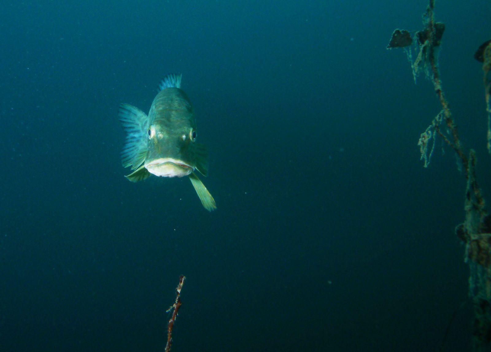 Plongée de la semaine avec mes amis les poissons