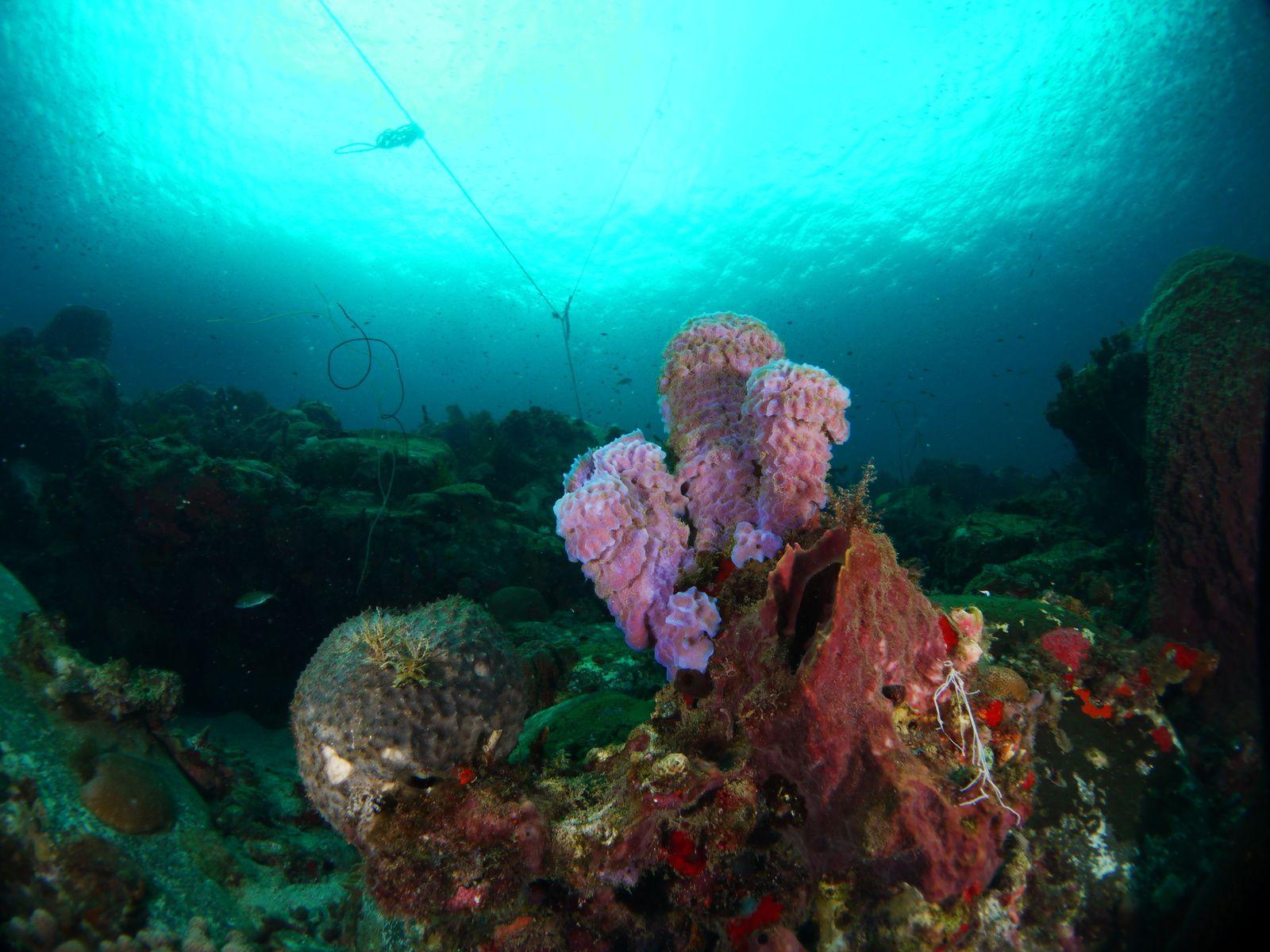 Premier jour de plongée en Martinique
