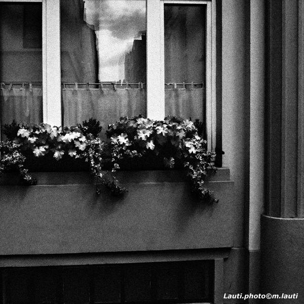 Bac à fleurs  - Bruxelles