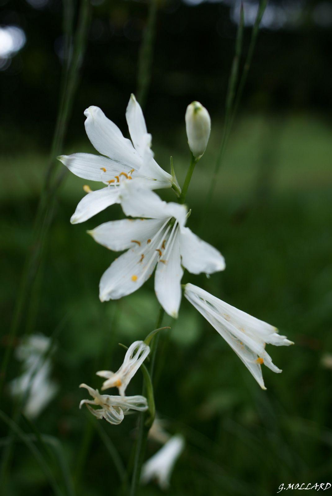 La flore de mes randos