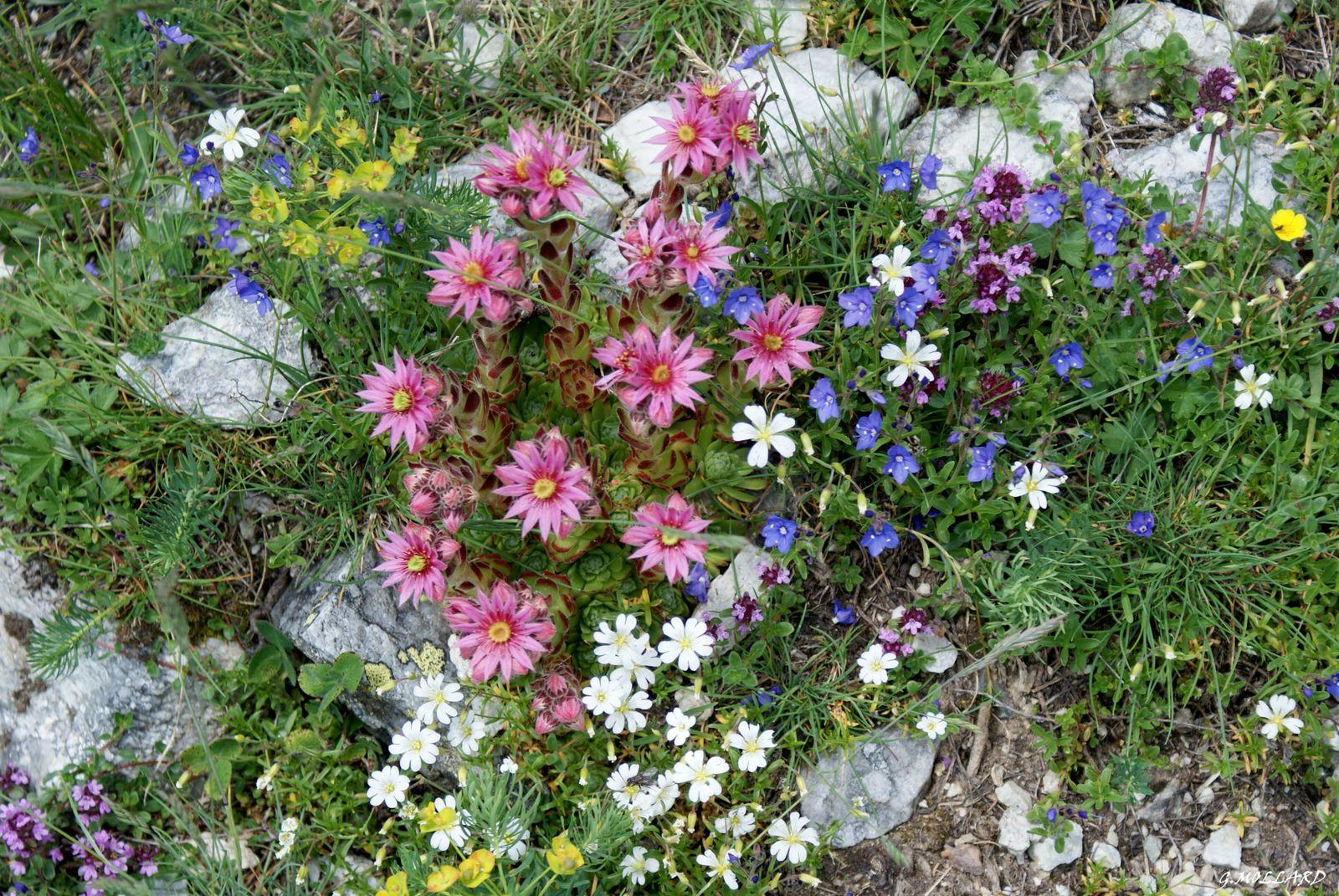 magnifique bouquet de couleurs.