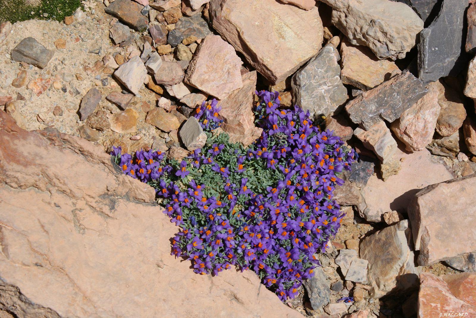 si quelq'un peut me donner le nom de cette plante magnifique, merci d'avance,je n'ai pas trouvé dans mes bouquins.