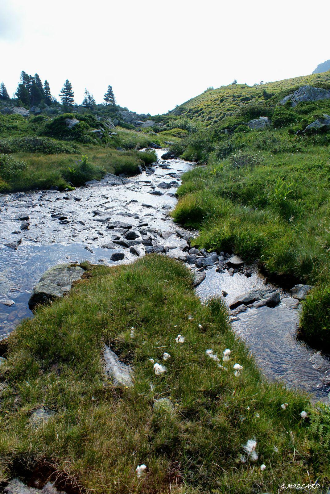 "ruisseau de la Freche qui s""en va vers la vallée."