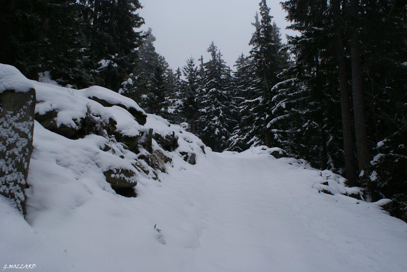 piste forestiére.