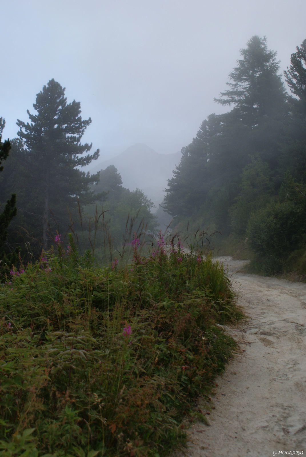 piste et brouillard.