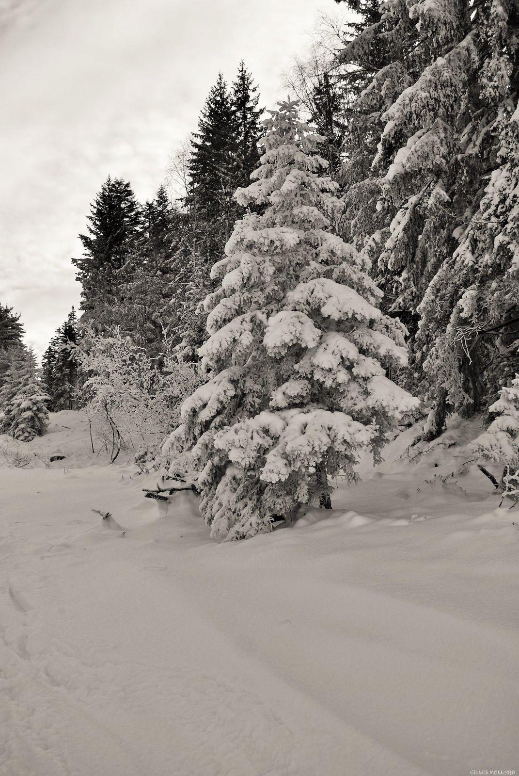 7) Figé sous la neige.