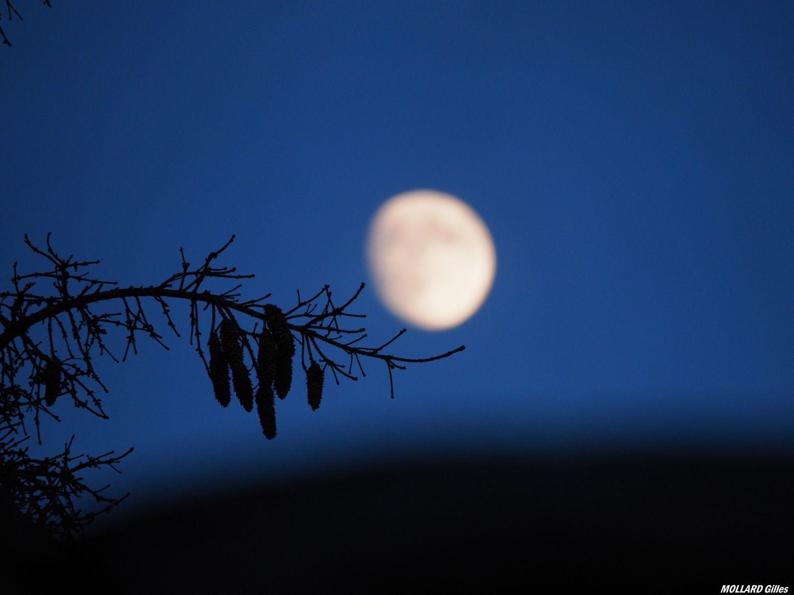 mon ami la lune sur une branche perchée.
