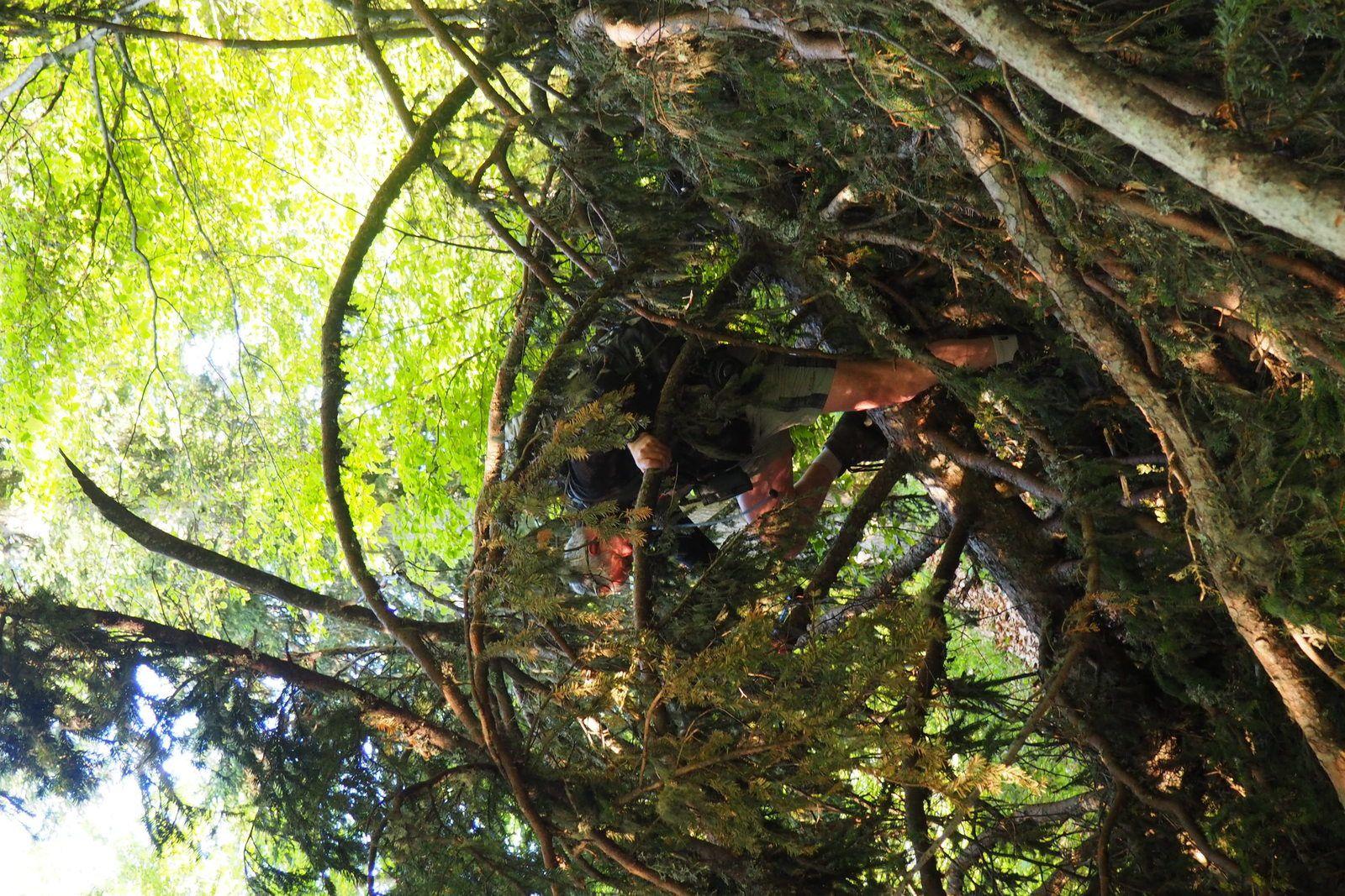 Pascal prisonnier dans les branches.