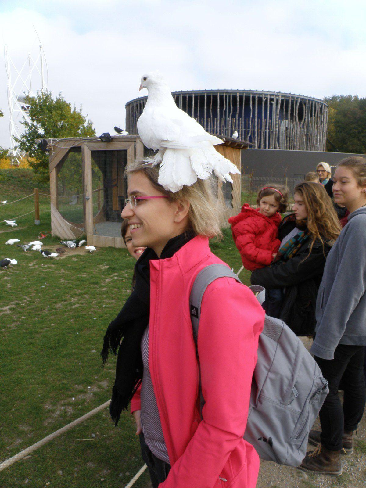 Mardi, un tour au Parc du Petit Prince où j'ai inévitablement fini avec un pigeon sur la tête.