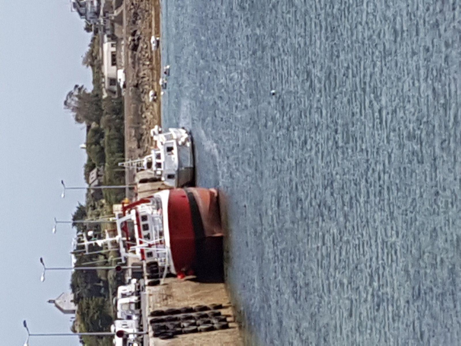 Roscoff et son port à marée basse, un goéland peu farouche !