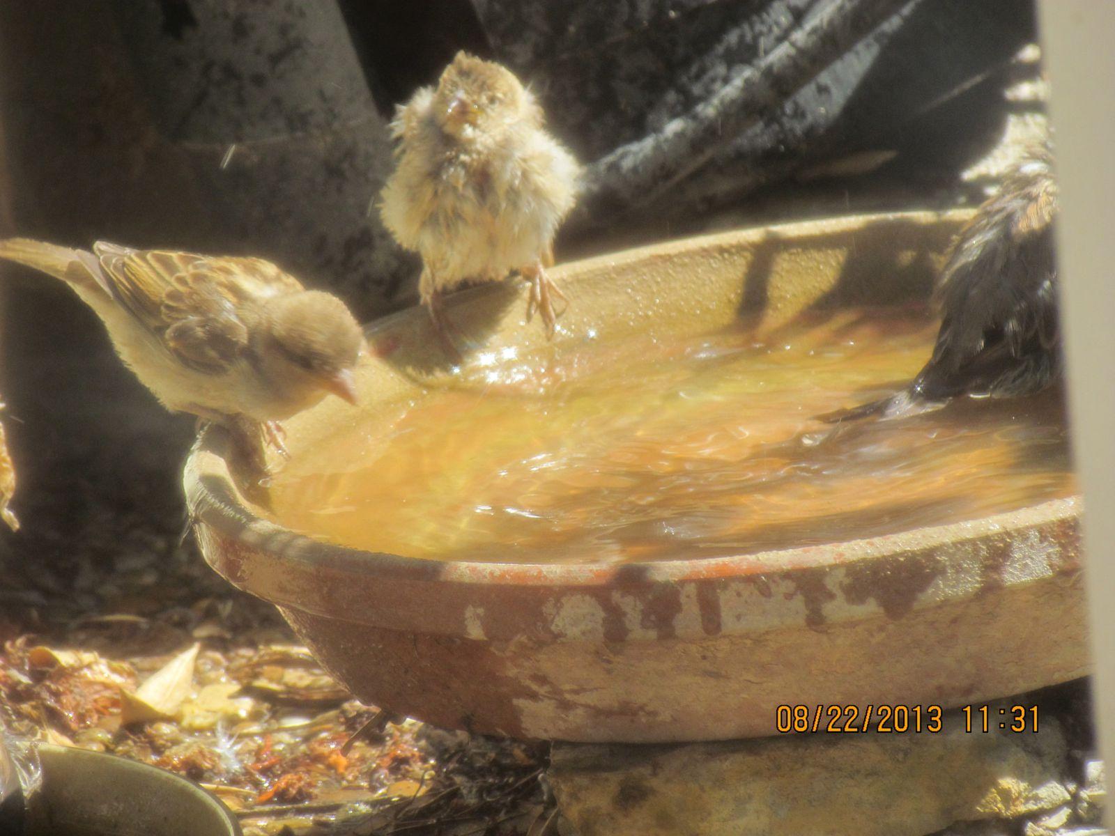 castries plage  a oiseaux