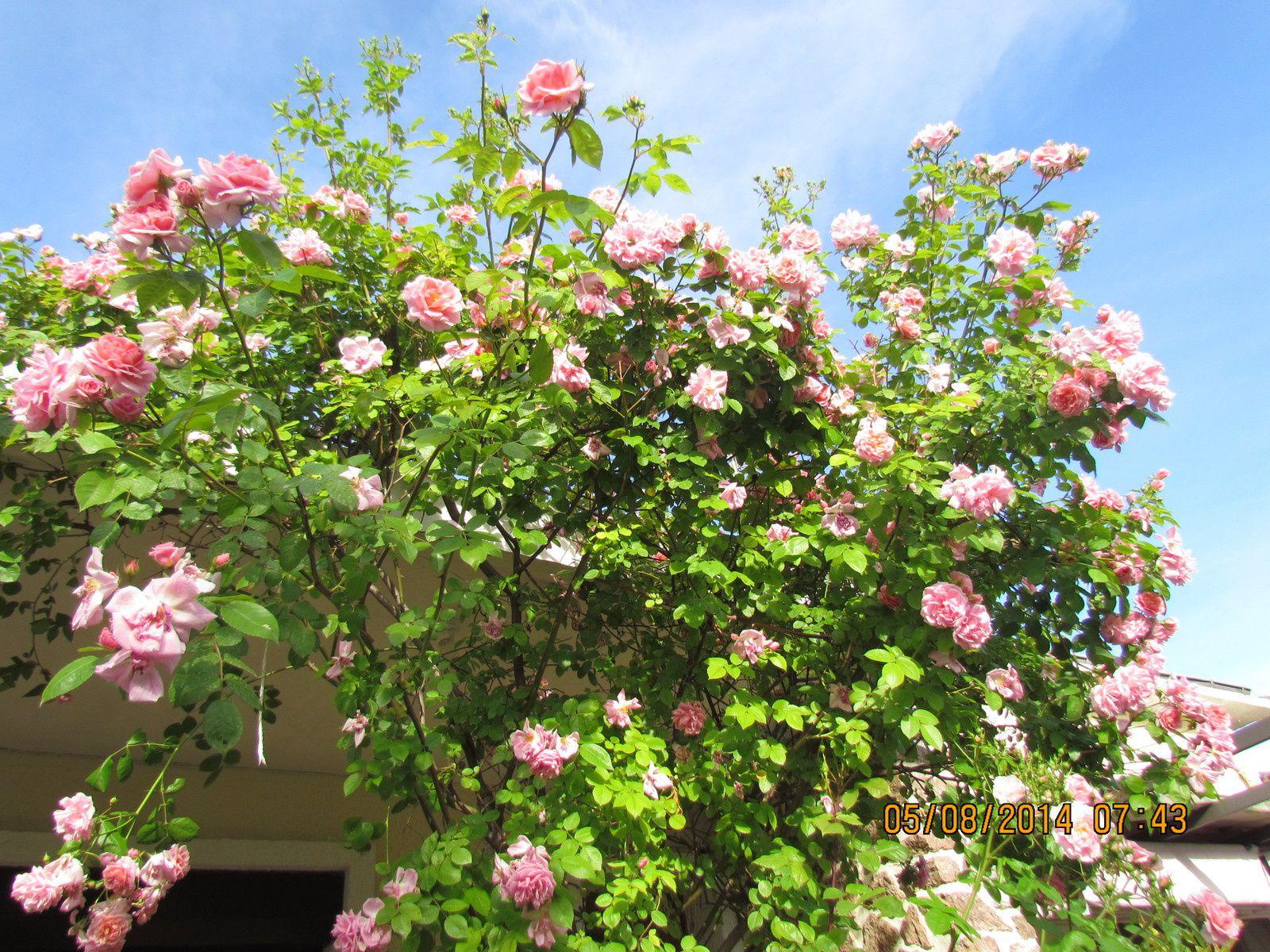 mon jardin juin 2014 musique  julio iglesias photos pierre subias