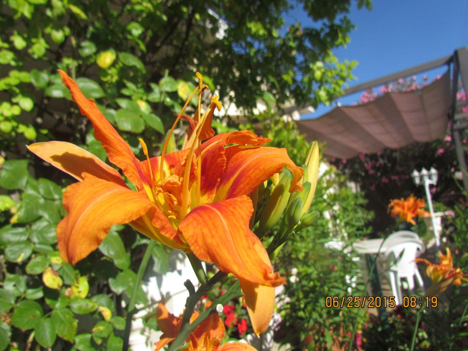 Mon jardin 2015 le blog de buquinp mosaiques et peinture for Jardin lune juillet 2015