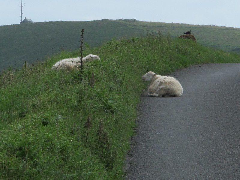 Qui dit routes tranquilles, dit aussi rencontres étonnantes.