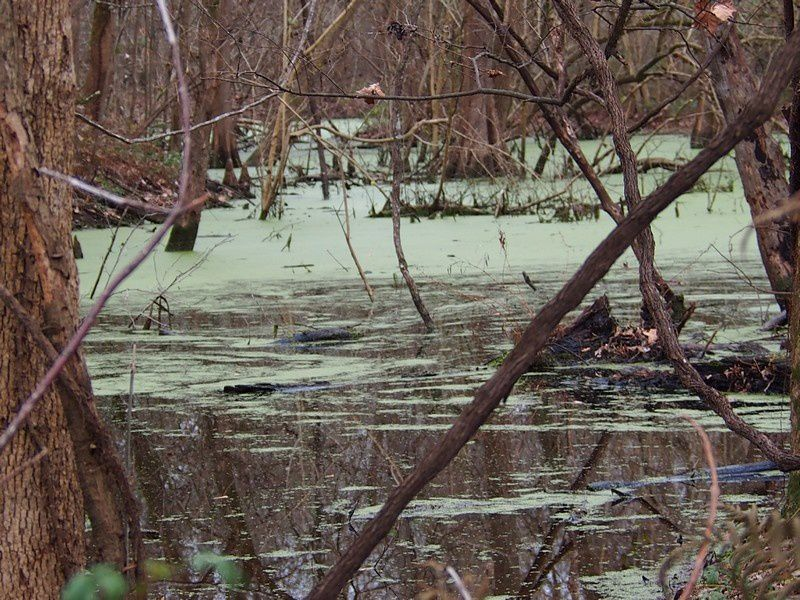 Trop frais, pas d'alligators ce matin.