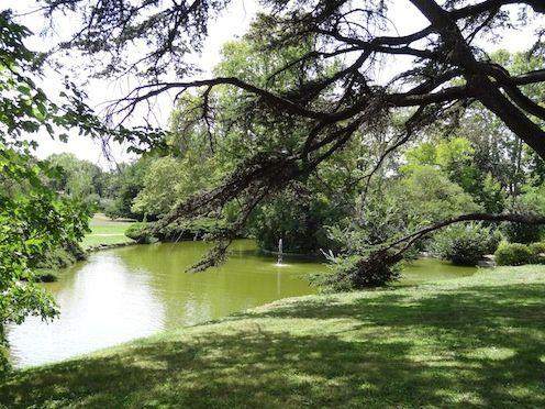 dans le parc sous les arbres
