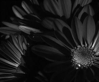 Les fleurs du néant…