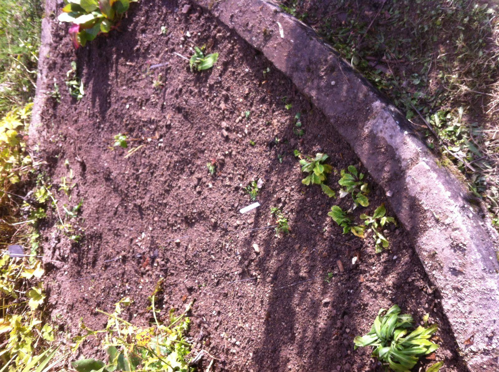 De haut en bas : centaurées, Anémone pulsatilles, plantes inconnues, Monarde bergamote, Doronique et vue d'ensemble