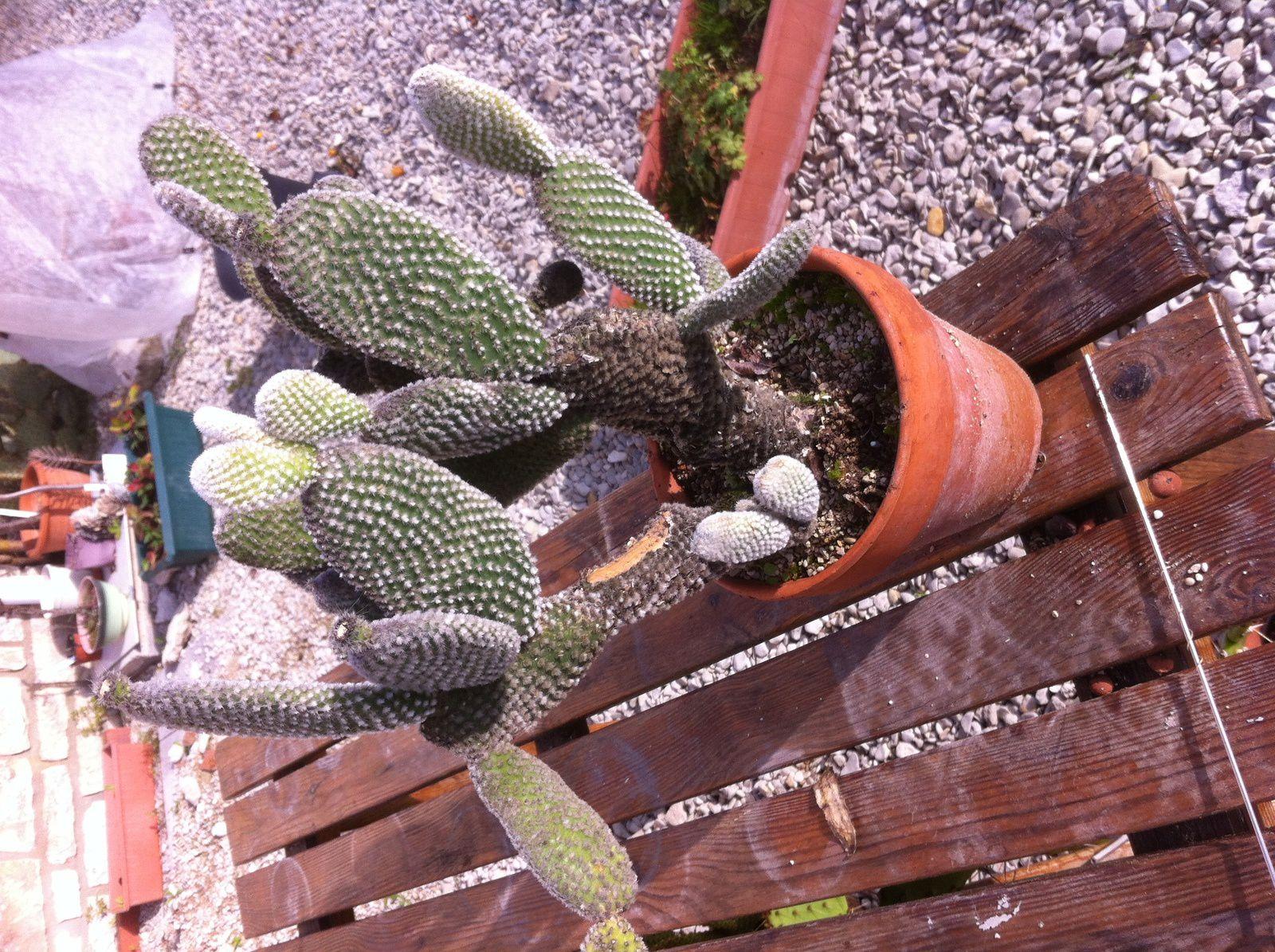 cactées et plantes grasses
