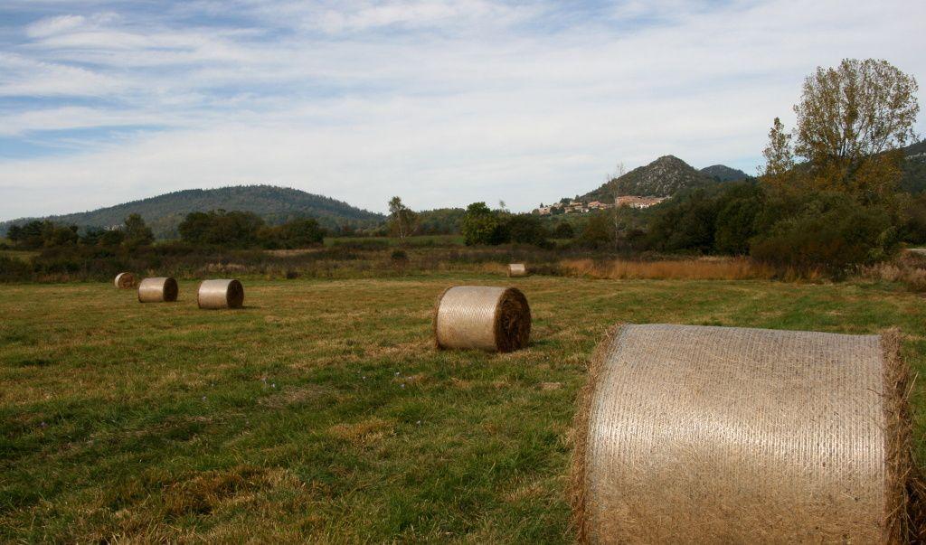 La Route Des Sapins, pays de Sault, (Aude)