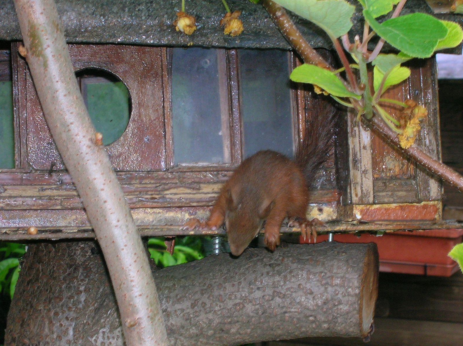 ces squatteurs d'écureuils (la suite)