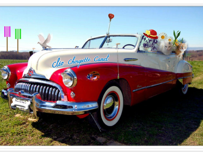 Cléo est en route pour de nouvelles aventures à bord de sa Buick américaine