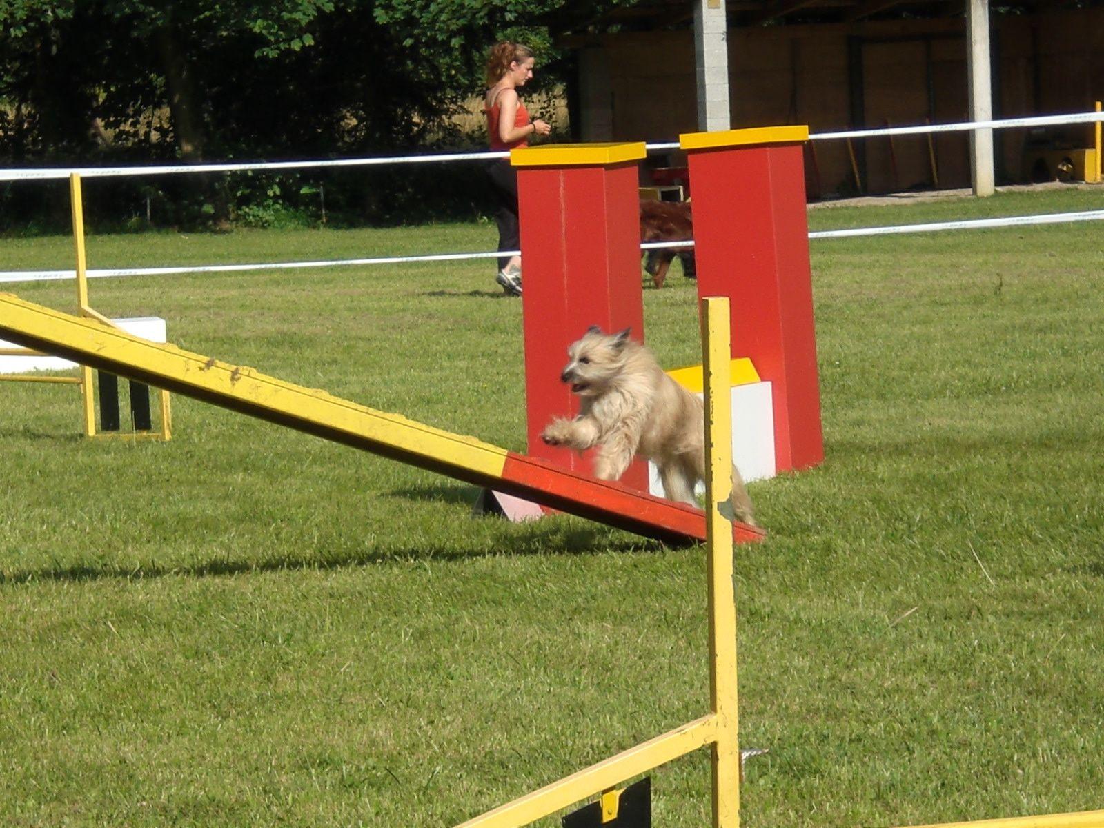 Concours agility 17 août 2014