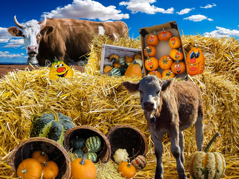 Fête de l'agriculture paysanne à Vesdun (18)
