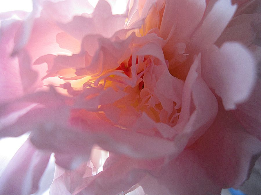 ROSE-LUMIERE