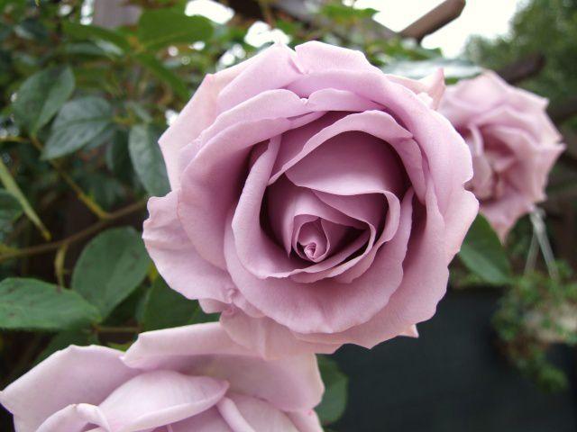 DIOR 10 ans d'une Histoire de Rose