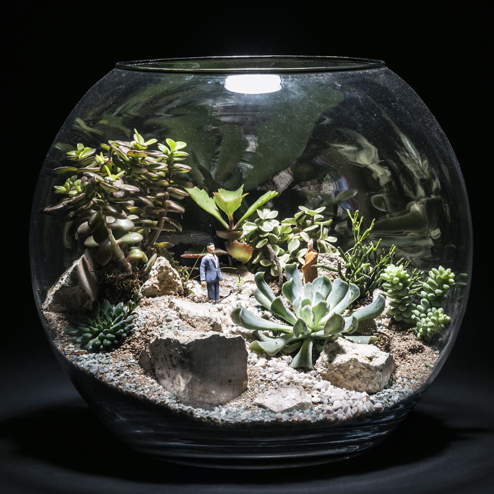 micro jardins de cactus min ral et vegetal l 39 art du terrarium cr atif. Black Bedroom Furniture Sets. Home Design Ideas