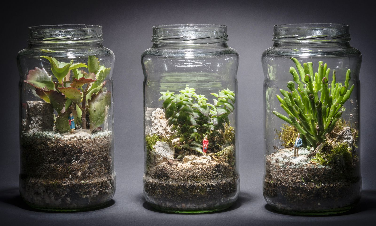 terrarium pour plantes fashion designs. Black Bedroom Furniture Sets. Home Design Ideas