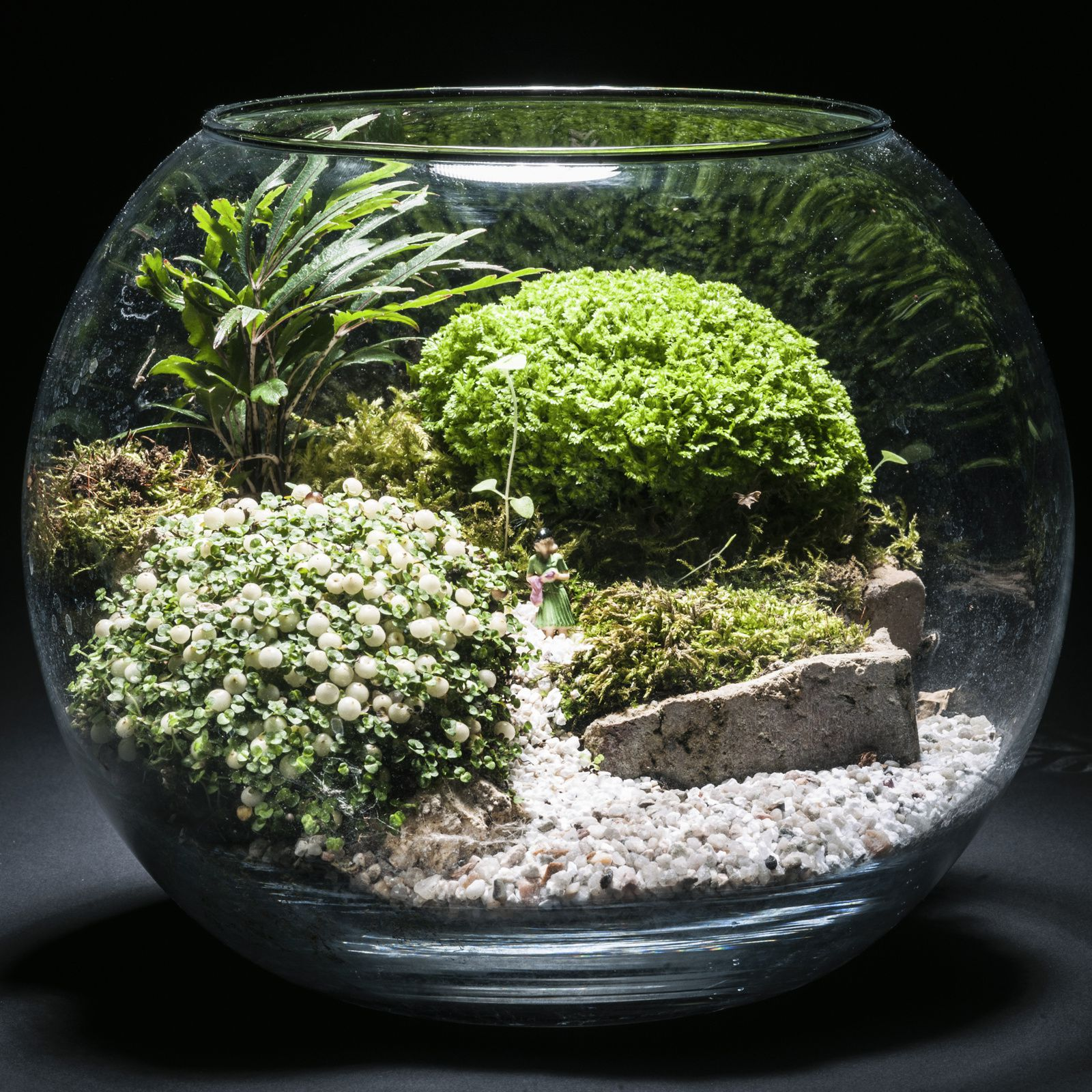 min ral et vegetal l 39 art du terrarium cr atif je realise des paysages vivant en miniature. Black Bedroom Furniture Sets. Home Design Ideas