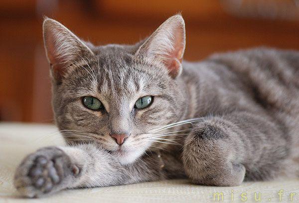 Entre la chatte et le rat fatto57 - Pourquoi un chat fait pipi sur le lit ...