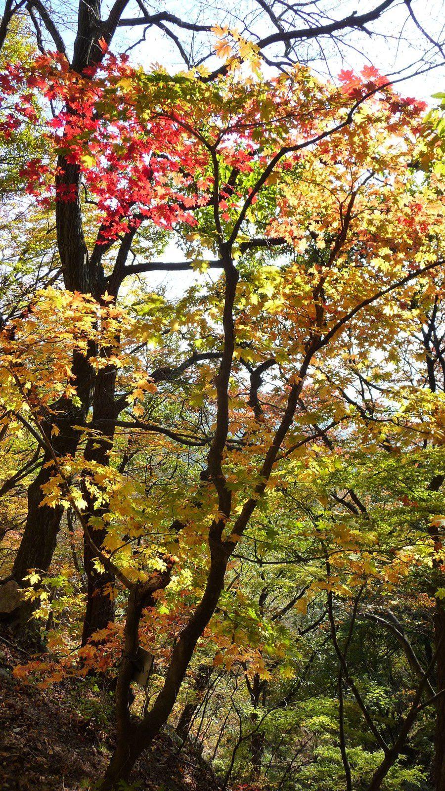 Encore un peu de grimpette à travers la forêt pour atteindre la grotte de Seokguram et son Bouddha.