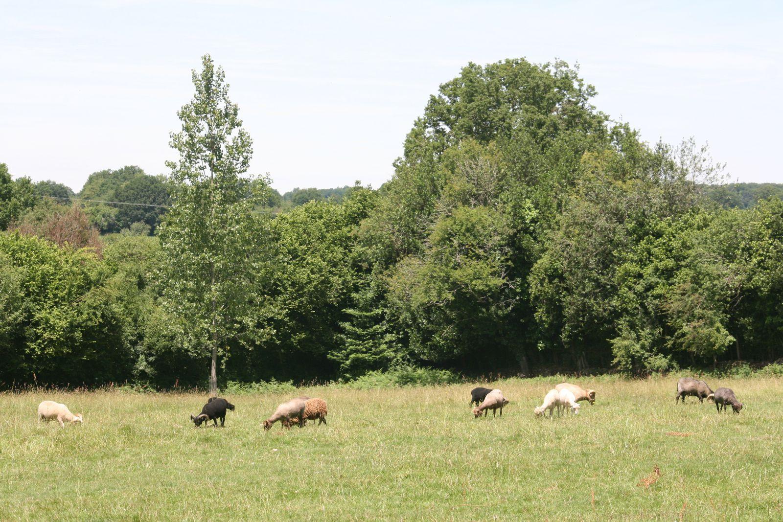 Le rappel de vaccination des agneaux est fait depuis deux jours, l'été peut être savouré pleinement.