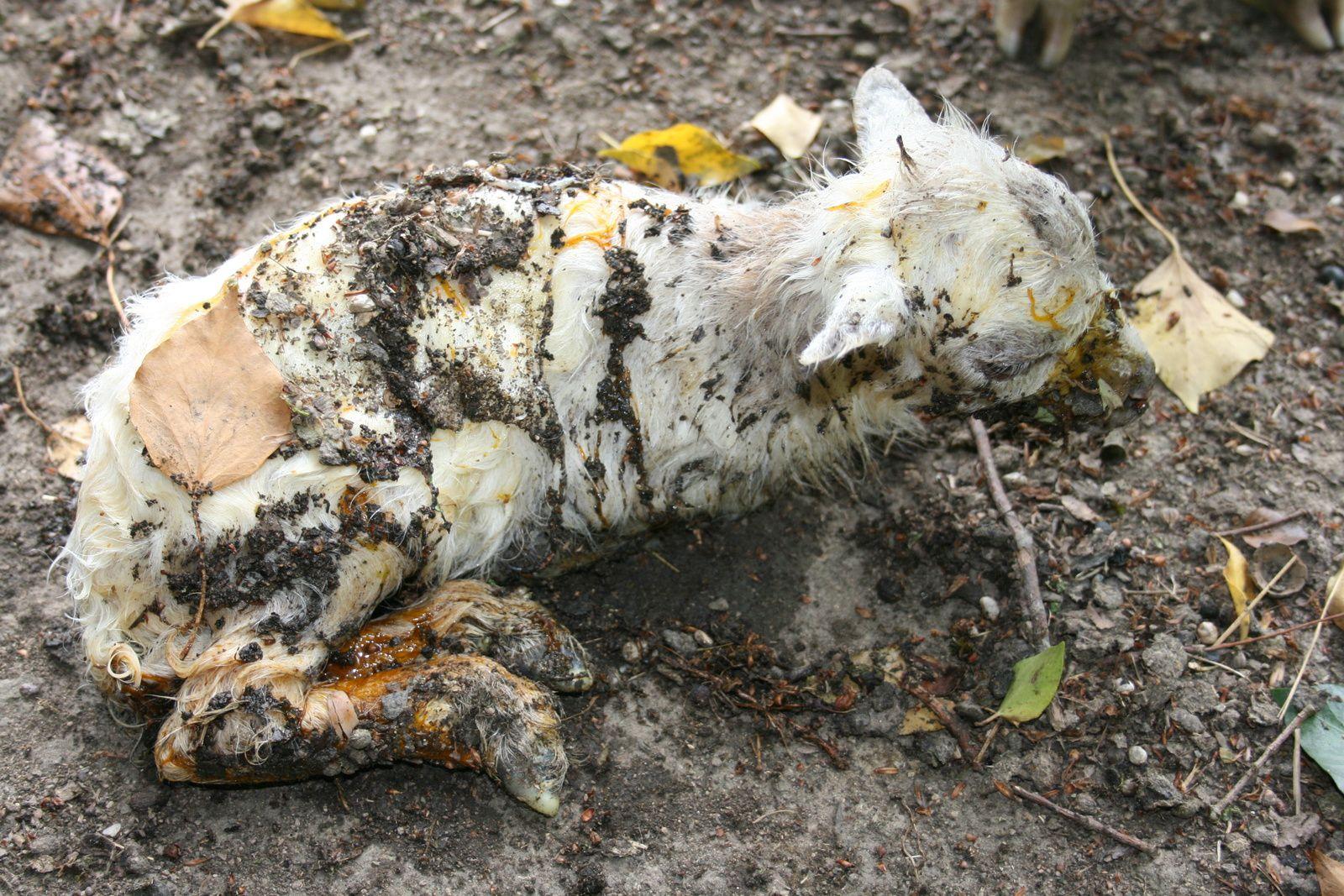 Mais avec la poussière, les feuilles, les glaires,...une vraie tenue de camouflage.