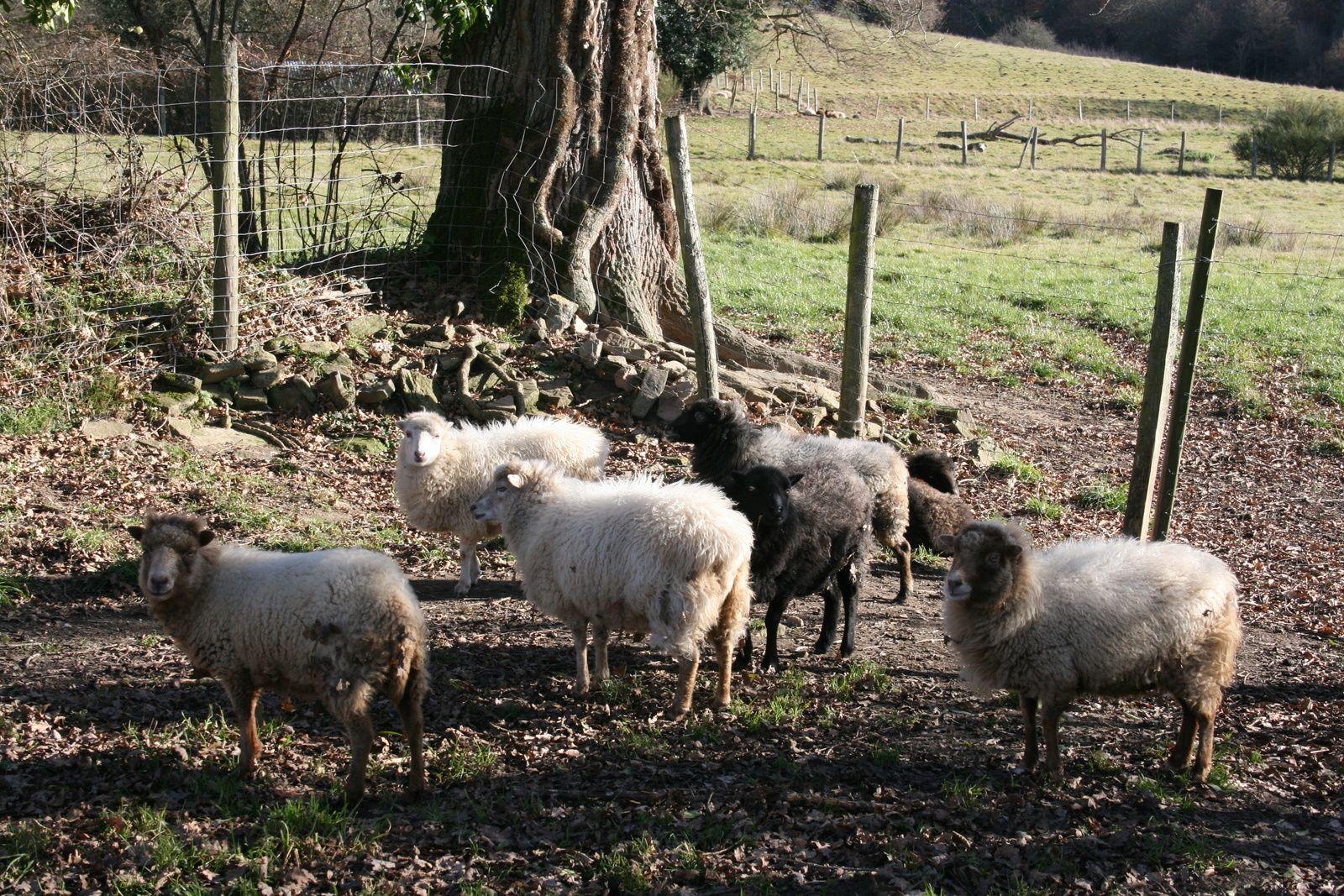 Les filles célibataires se languissent surtout de ne pouvoir vivre l'ambiance du troupeau réuni. Encore quelques mois de patience!