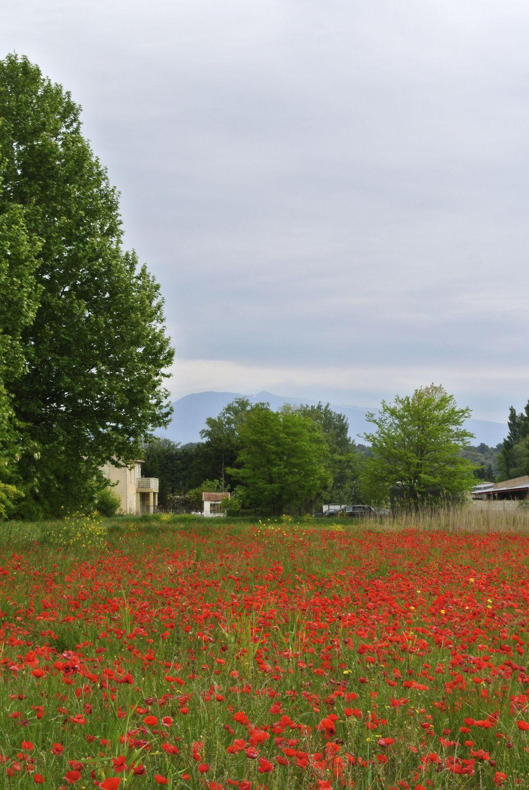 Balade entre Ardèche et Causses