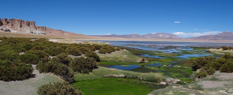 Salar de Tara (Reserva Nacional Los Flamencos - Site RAMSAR)