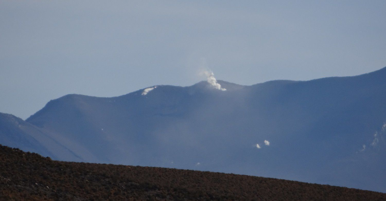 Volcan Isluga, cactus, lamas, llareta et queñua... (Photos : Eldesiertoflorido).