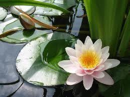 """""""Si quelqu'un est installé dans la non-violence, Autour de lui, l'hostilité disparaît"""" (Yoga sutra de Patanjali 2-35)"""