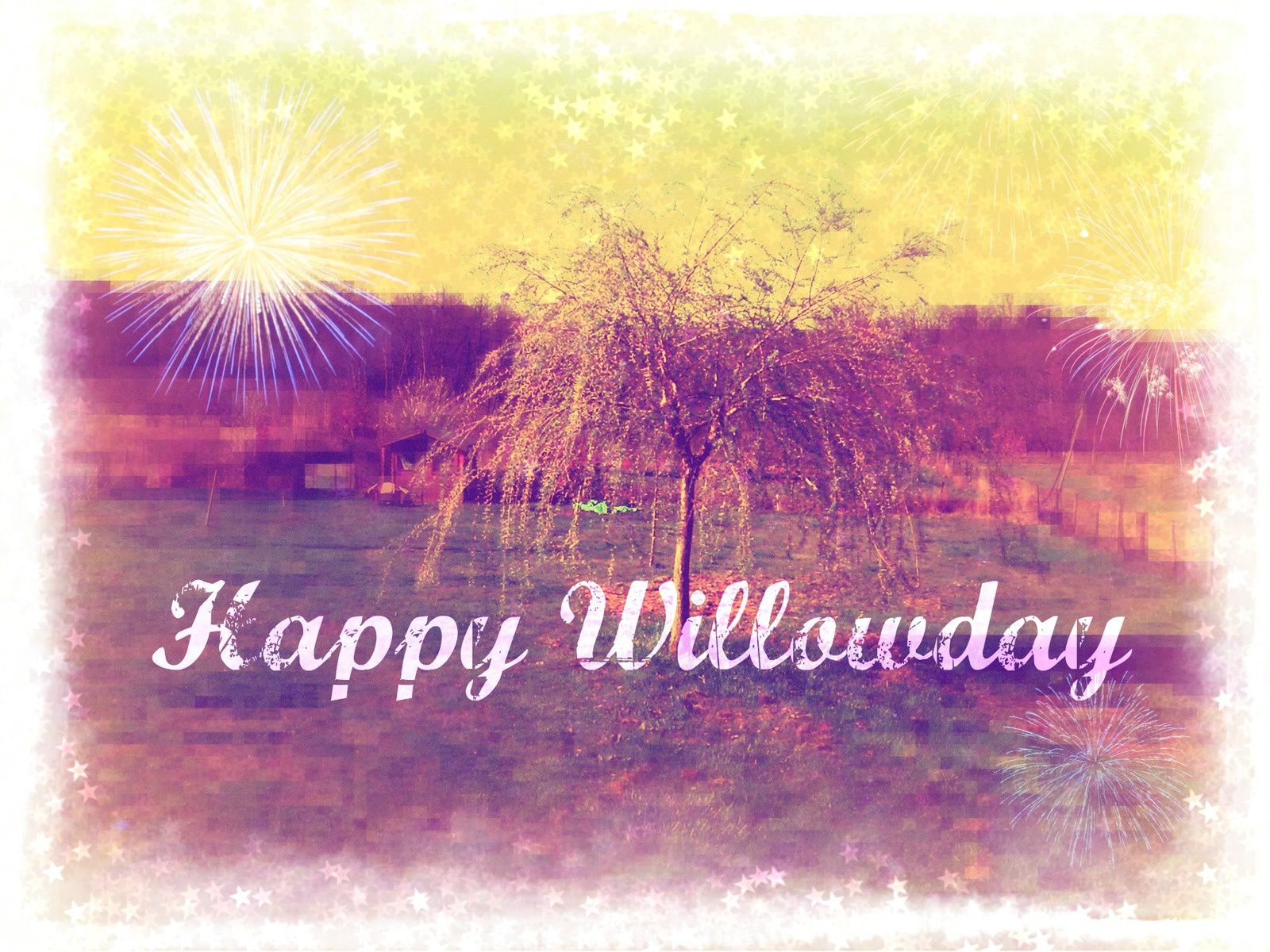 Happy Willowday!!