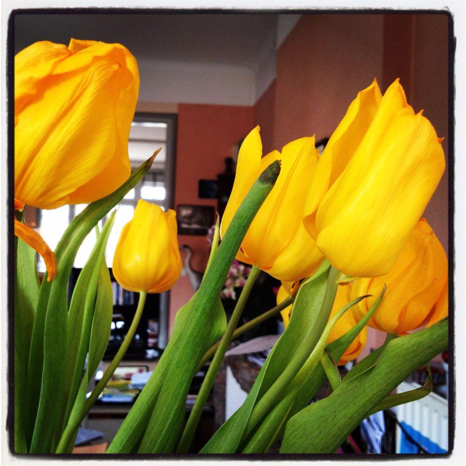 Les tulipes de Dom